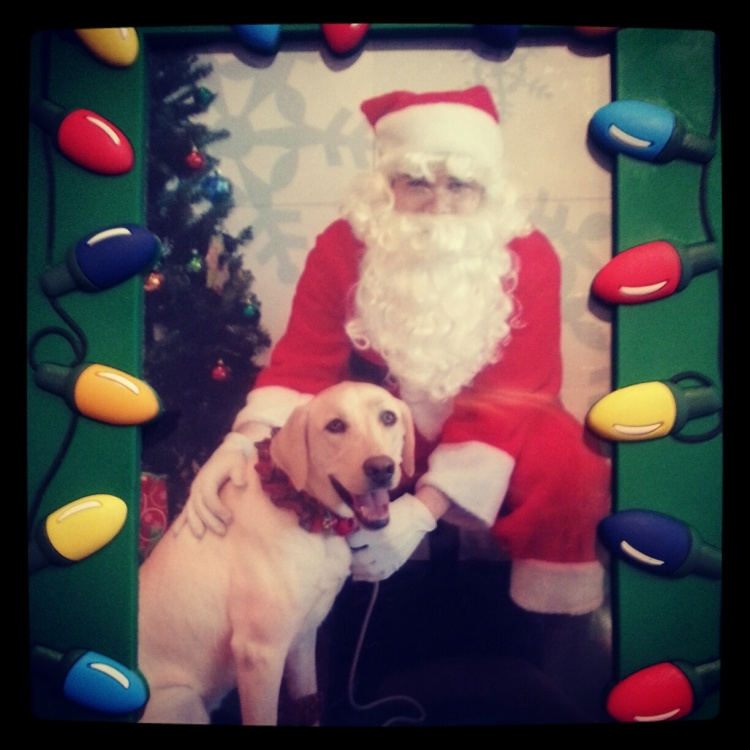 Kipling visiting Santa. She has never been afraid of anyone before, but she was terrified of Santa. It was so sad and funny at the same time.