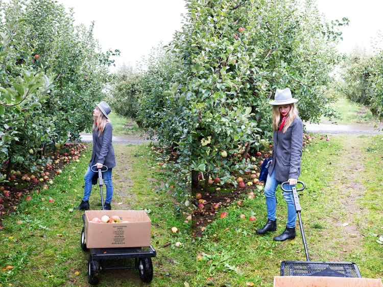 kiyokawaorchardsapplepicking12web