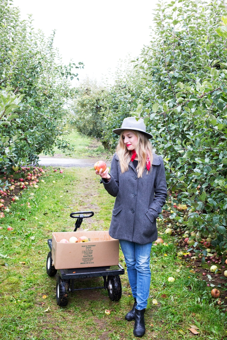 kiyokawaorchardsapplepicking13web