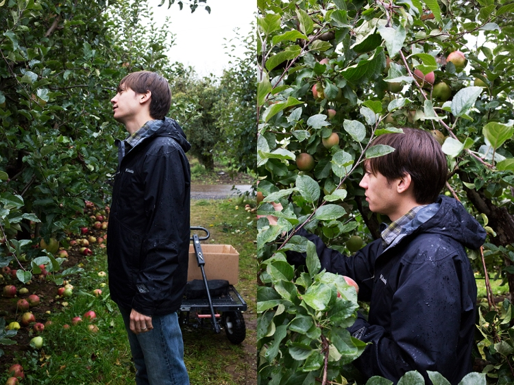 kiyokawaorchardsapplepicking7web