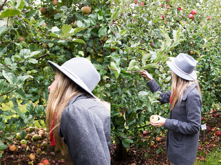 kiyokawaorchardsapplepicking8web
