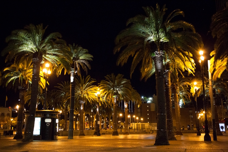 sanfranciscopalmtrees