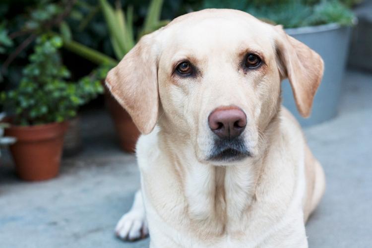 valentinesdog1