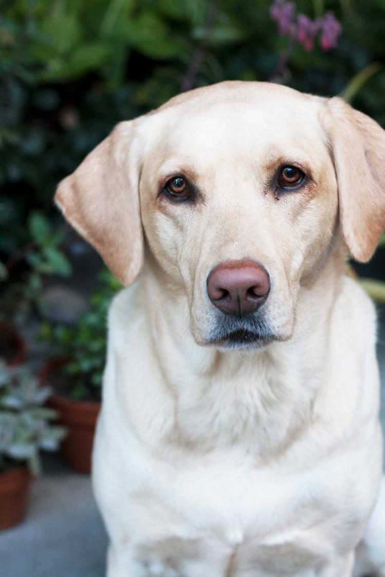 valentinesdog2