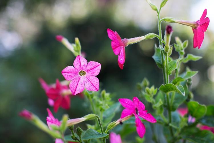 springflowers1