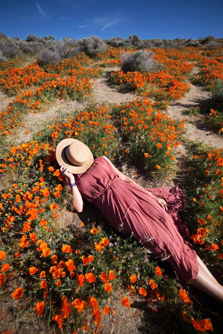 springpoppiescalifornia15