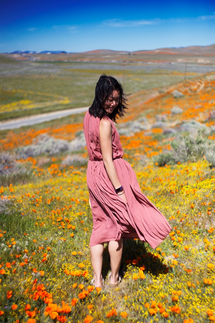 springpoppiescalifornia16