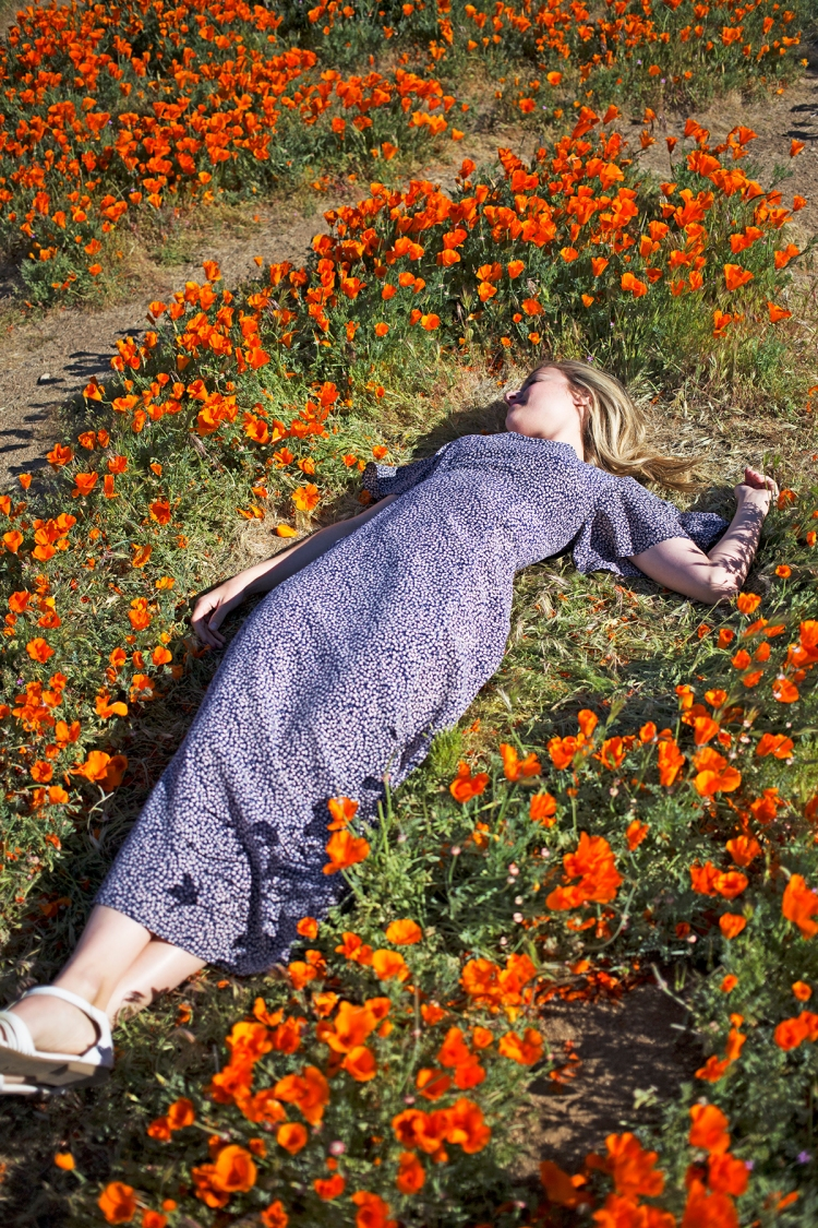 springpoppiescalifornia2