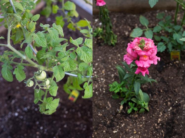 Spring Garden Growth