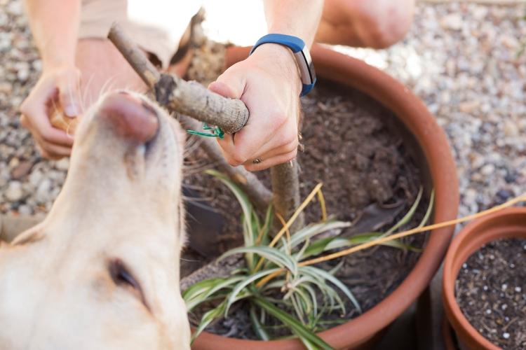 Spring Garden Replant