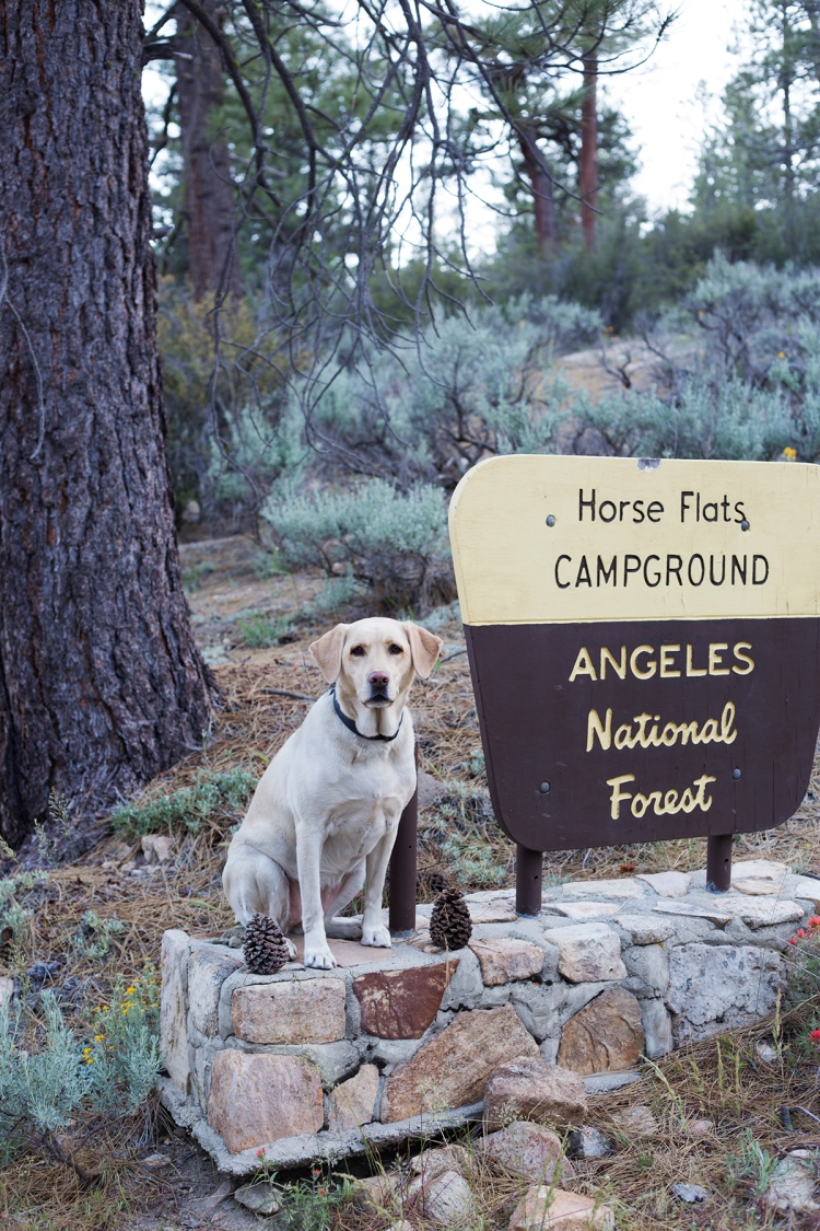 Horseflats Campground Angeles National Forest